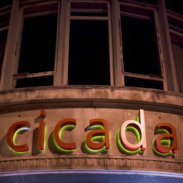 cicada-775x516